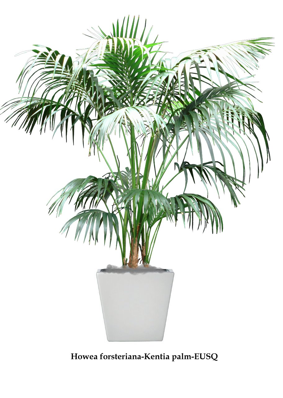 100 Low Light Plant Houseplants To Brighten Your